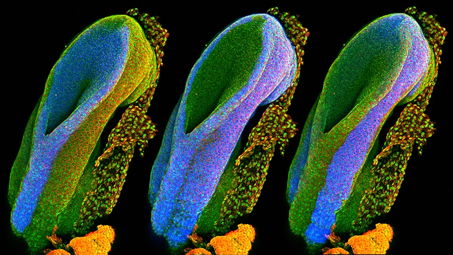 scientific photography wellcome image awards