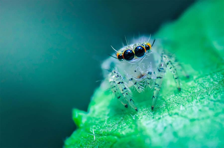 world wildlife day photography competition 10 finalists nature animals