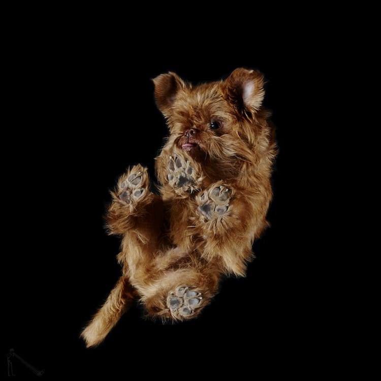 canine photography