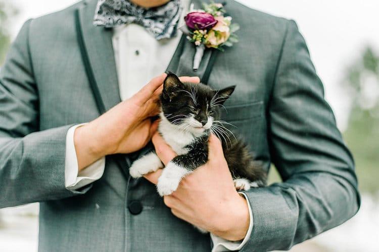 rescue kitten wedding cat-themed wedding cat wedding