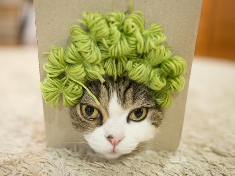 maru cat in a box