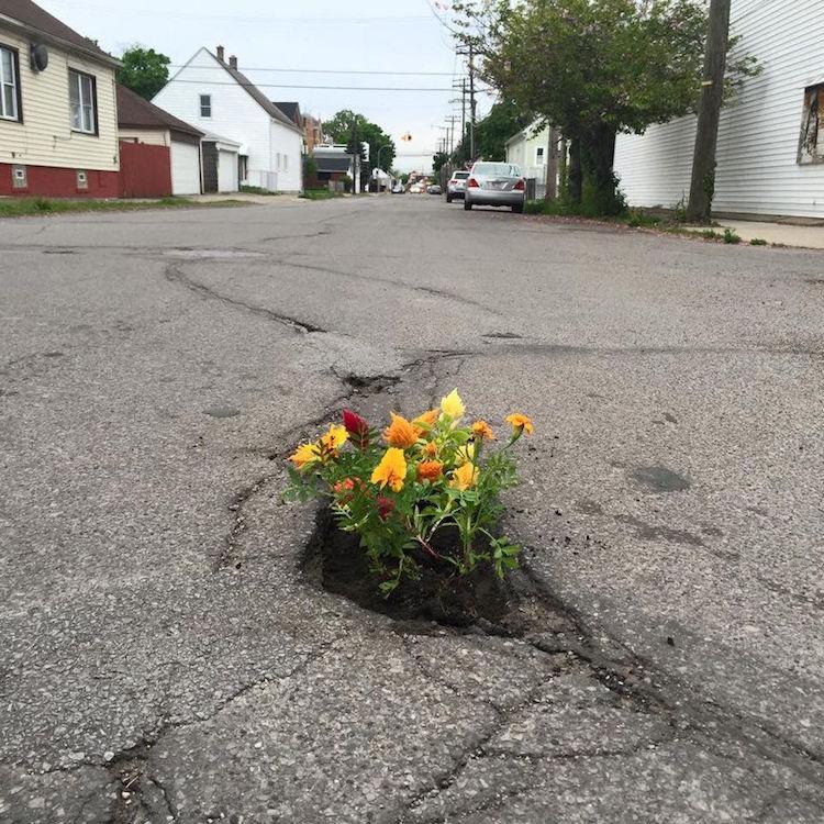 Pothole Flowers Flower Protest Guerrilla Gardening Protest Art Pothole Art