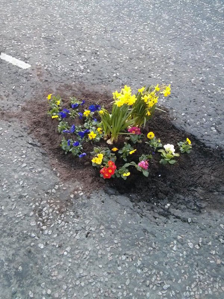 Pothole Flowers Flower Protest Guerrilla Gardening Protest Art Pothole Art