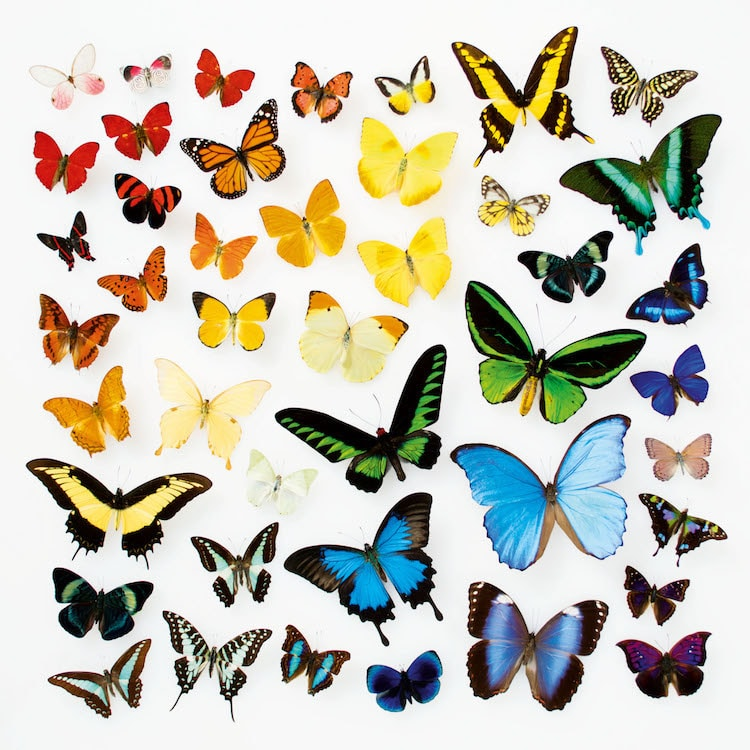 Encyclopedia of Rainbows Book Julie Seabrook-Ream Rainbows in Nature Natural World Butterflies