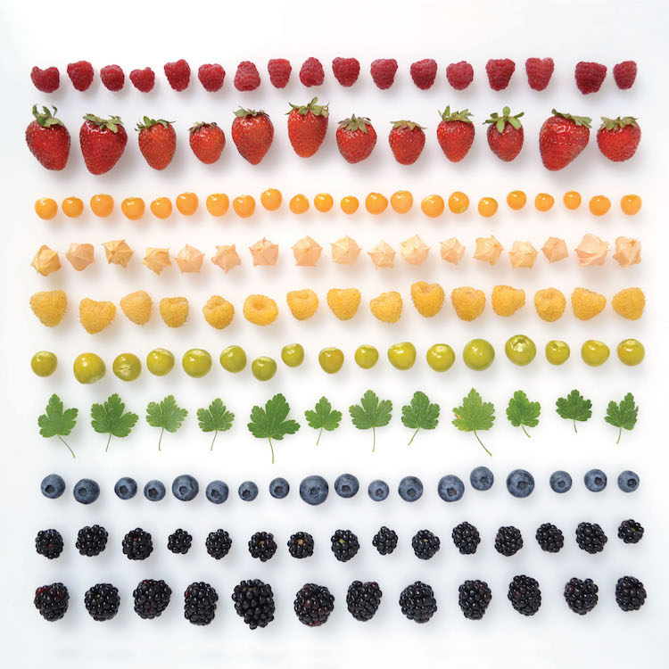 Encyclopedia of Rainbows Book Julie Seabrook-Ream Rainbows in Nature Natural World Berries