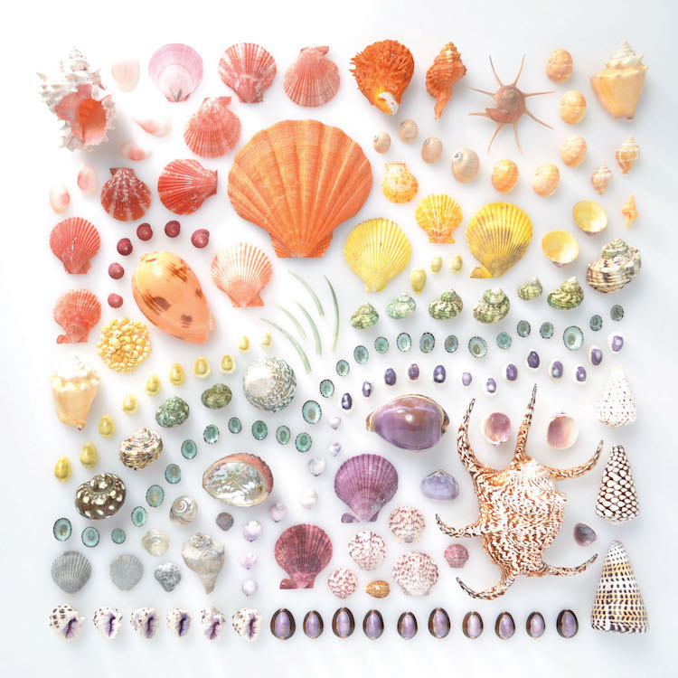 Encyclopedia of Rainbows Book Julie Seabrook-Ream Rainbows in Nature Natural World Shells