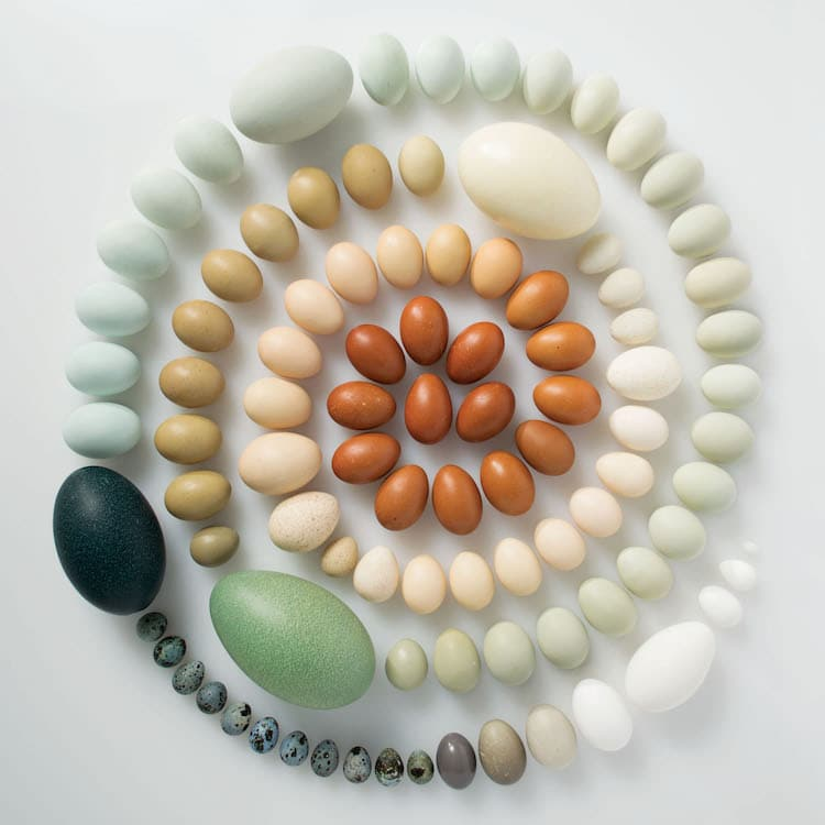 Encyclopedia of Rainbows Book Julie Seabrook-Ream Rainbows in Nature Natural World Eggs