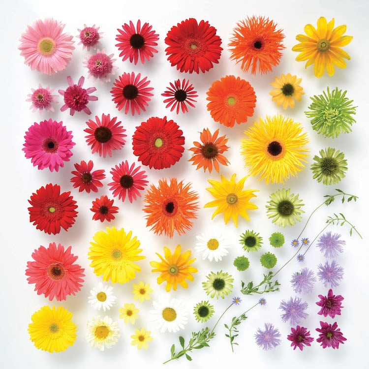 Encyclopedia of Rainbows Book Julie Seabrook-Ream Rainbows in Nature Natural World Daisies