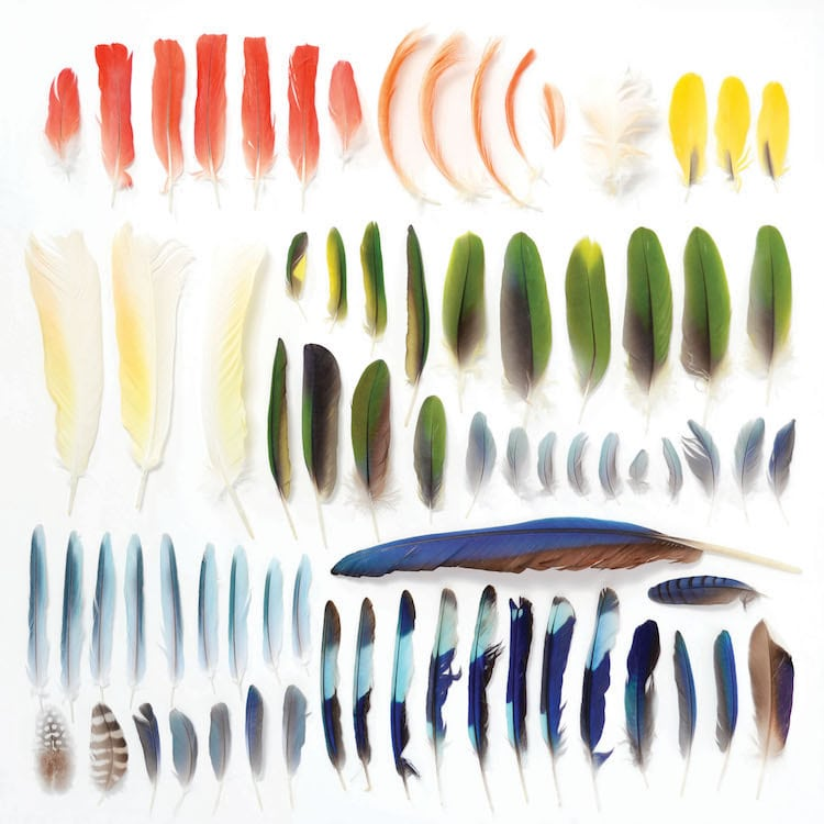 Encyclopedia of Rainbows Book Julie Seabrook-Ream Rainbows in Nature Natural World Feathers