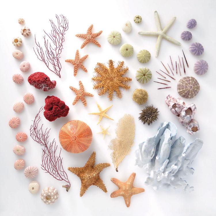 Encyclopedia of Rainbows Book Julie Seabrook-Ream Rainbows in Nature Natural World Sea Life