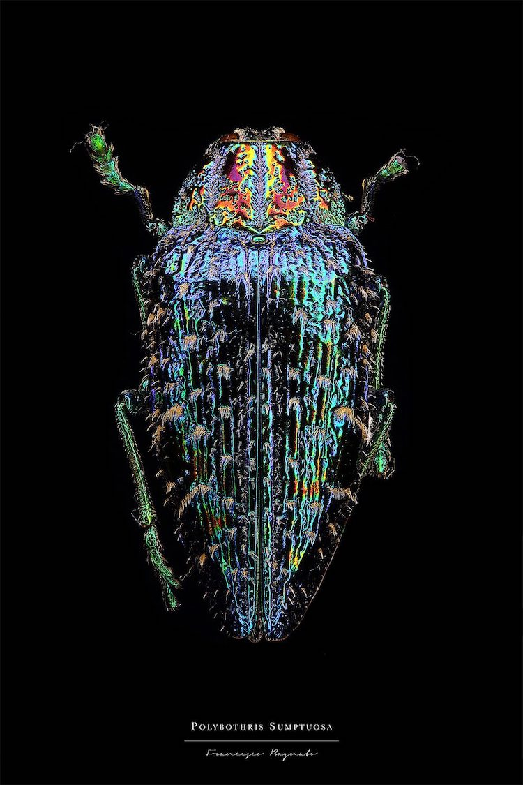 Francesco Bagnato Insect Macro Photography
