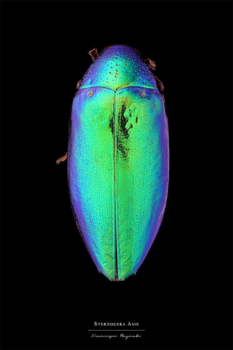 Francesco Bagnato Macro Insect Photography