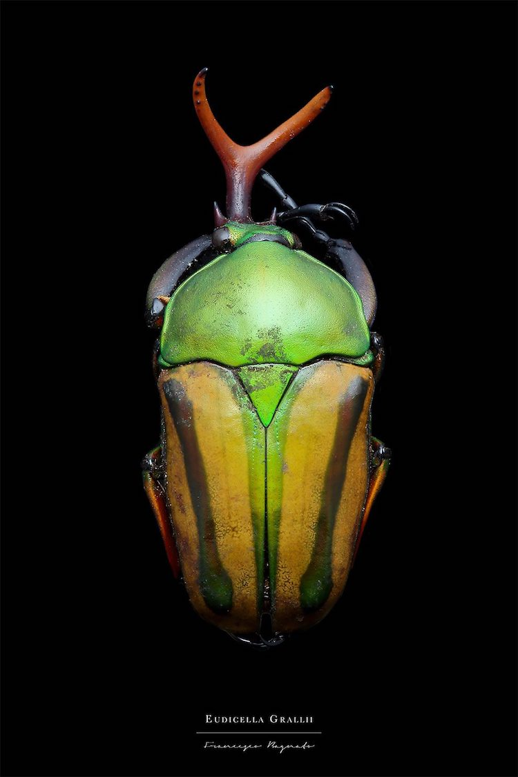 Francesco Bagnato Macro Insect Photography