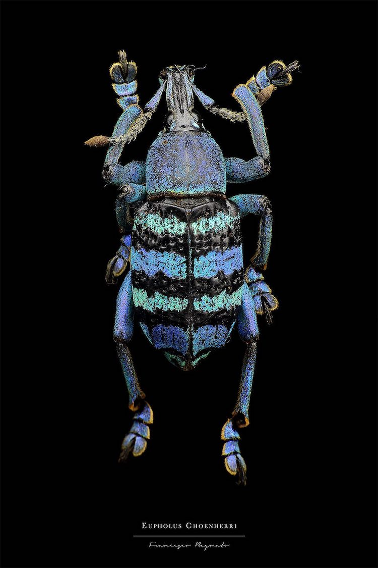 Francesco Bagnato Insect Macro Photography