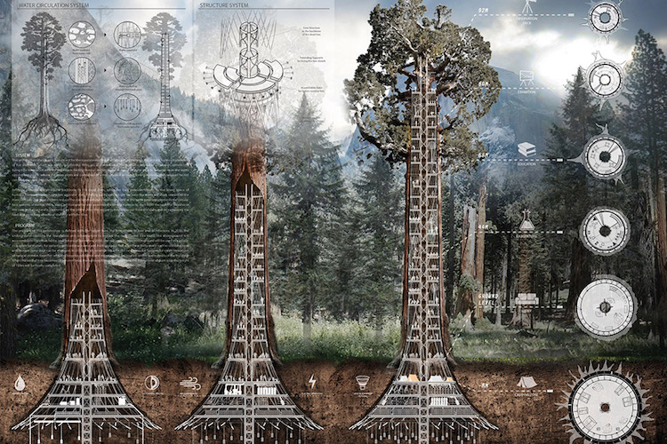 Giant Sequoia Skyscraper Concept