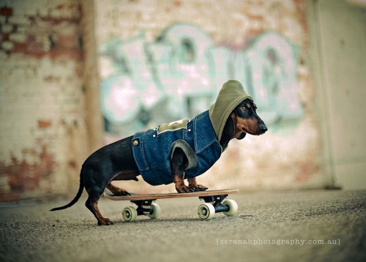 Professional Pet Photography