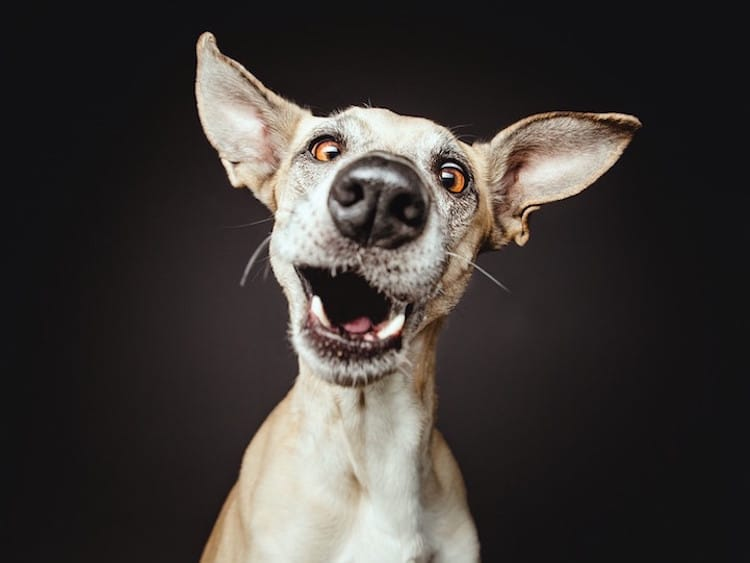 How Photographers Have Elevated Pet Photography Into an ...