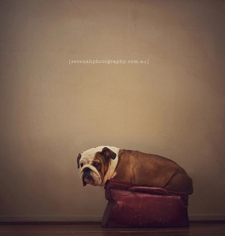 Best Pet Photography