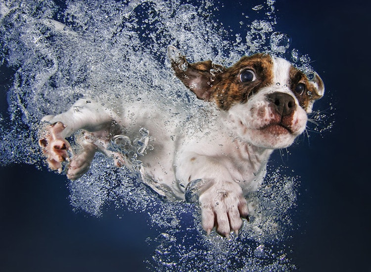 Image result for Pet photography