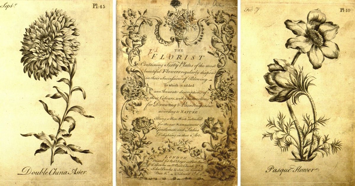 Unexpected Discovery Reveals 18th Century Adult Coloring