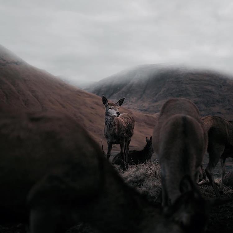 Fran Mart Photography Scotland animals