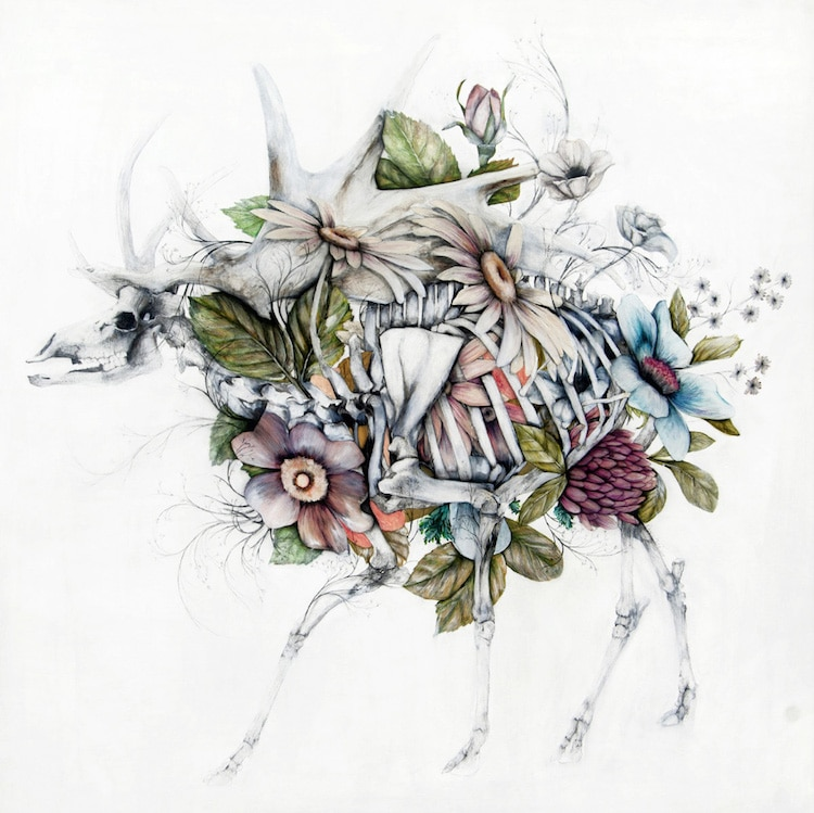 Anatomy Of A Combine : Anatomical art combines animals with the flora of
