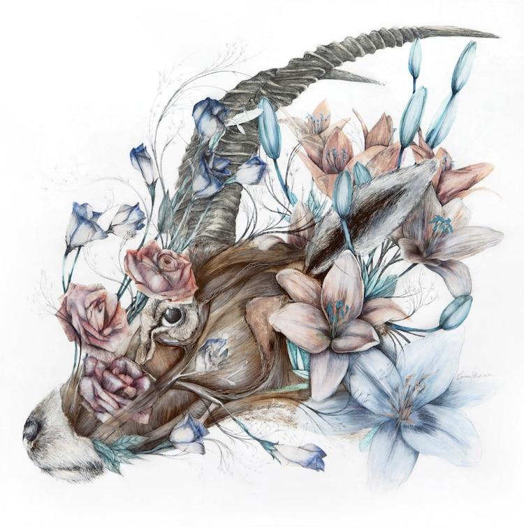 nunzio paci anatomical art