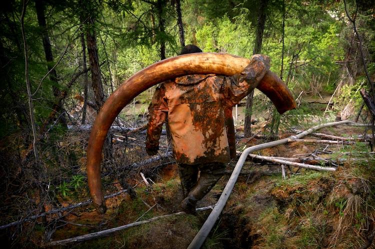 amos chapple radio free europe mammoth ivory
