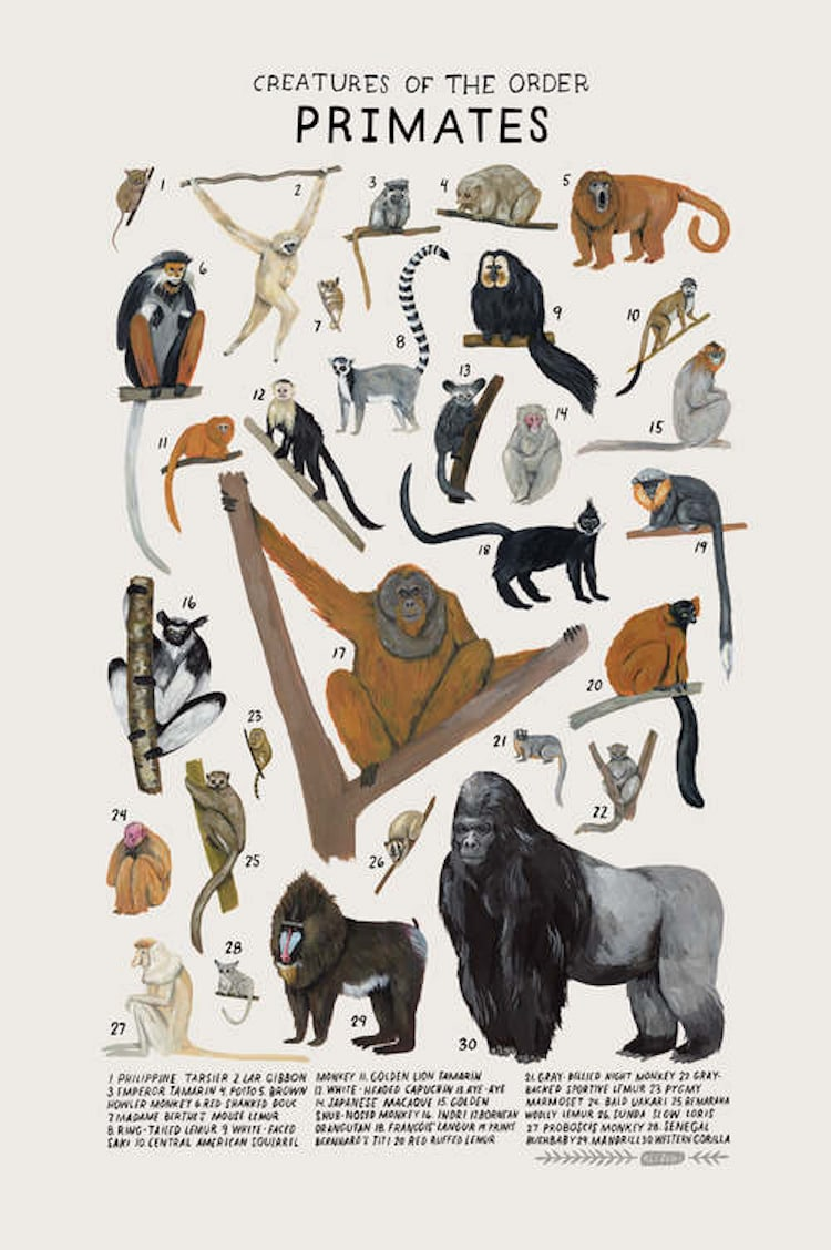 Animal Illustrations Animal Groups Kelsey Oseid