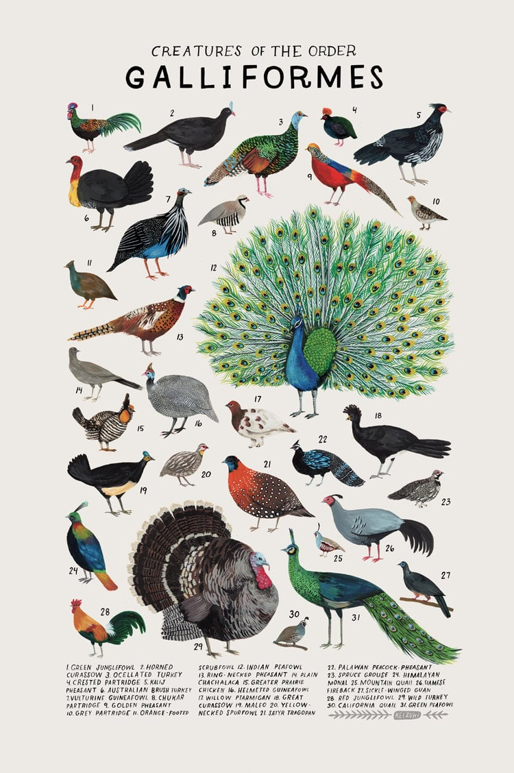 animal illustrations present the diversity of different animal groups