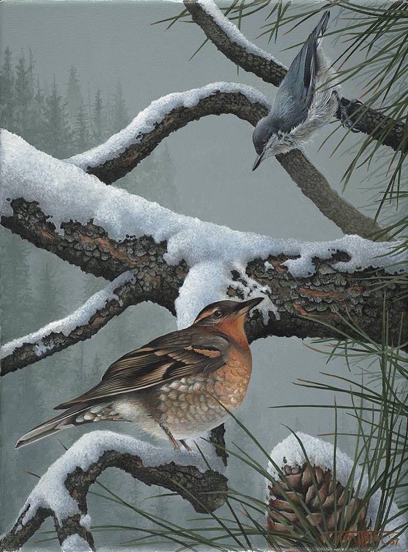 Tom Mital Wildlife Art Bird Painting