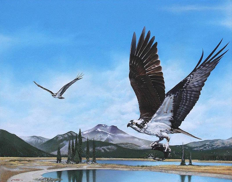 Tom Mital Wildlife Art Bird Painting