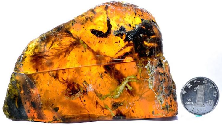 Enantiornithine bird amber myanmar