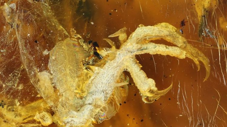 animal preserved in amber myanmar