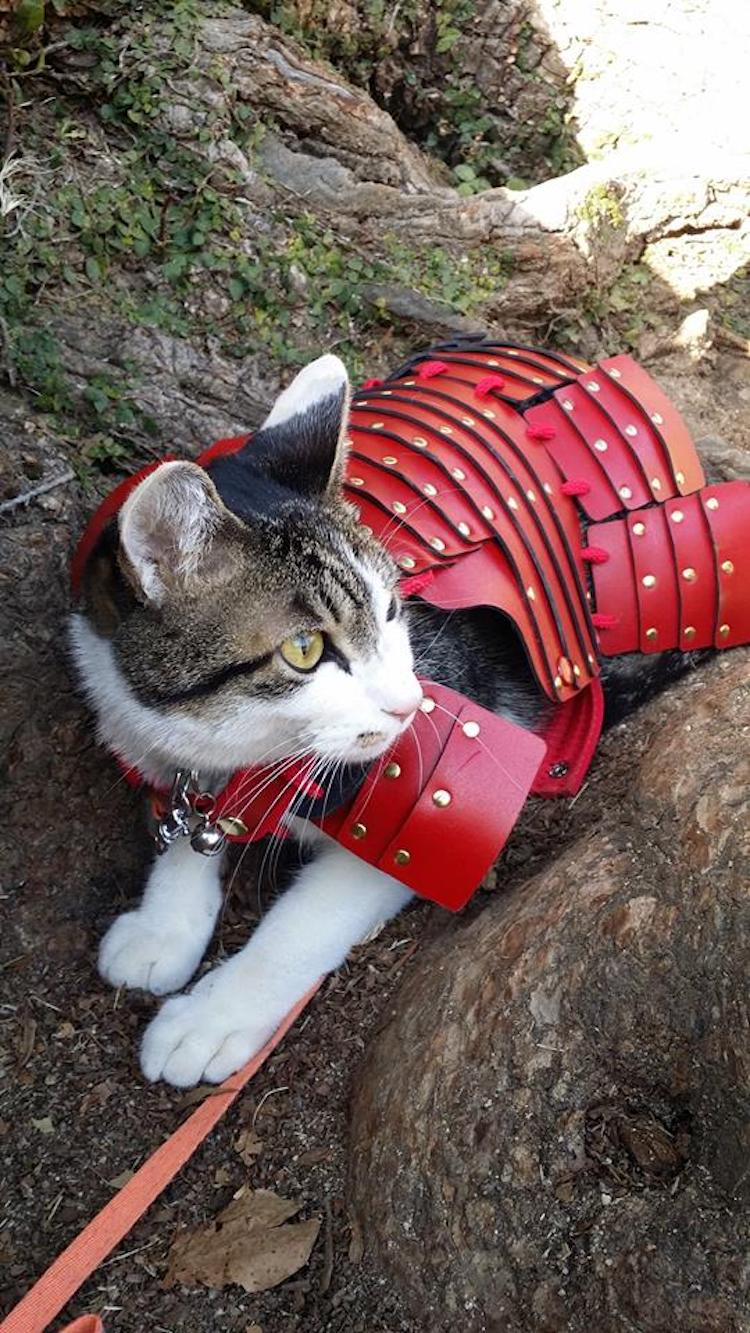 Samurai Pet Costumes Bring Out The Loyal Warrior In Your