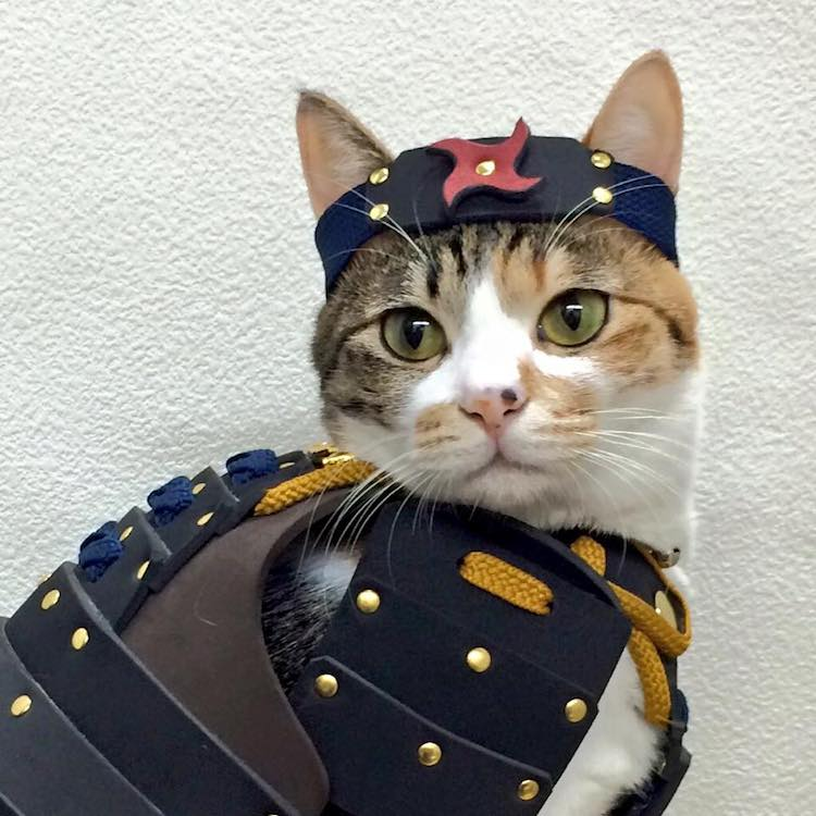 Costumes for Pets