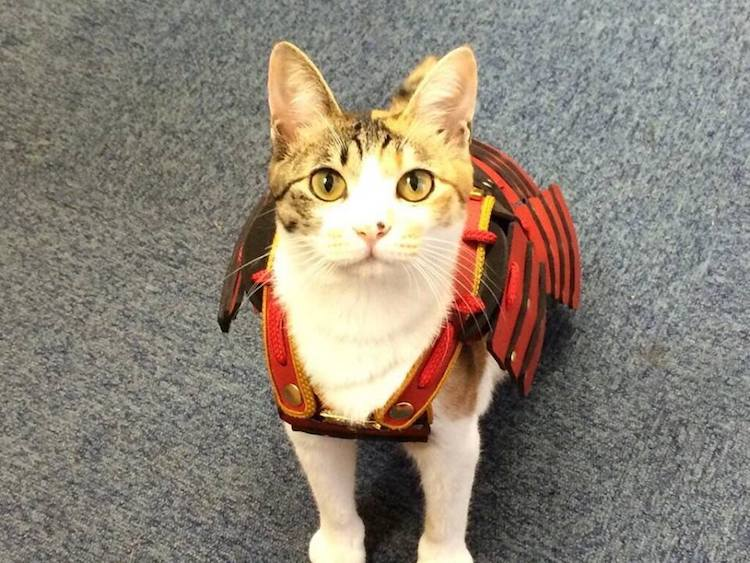 Cat Outfits For Dogs