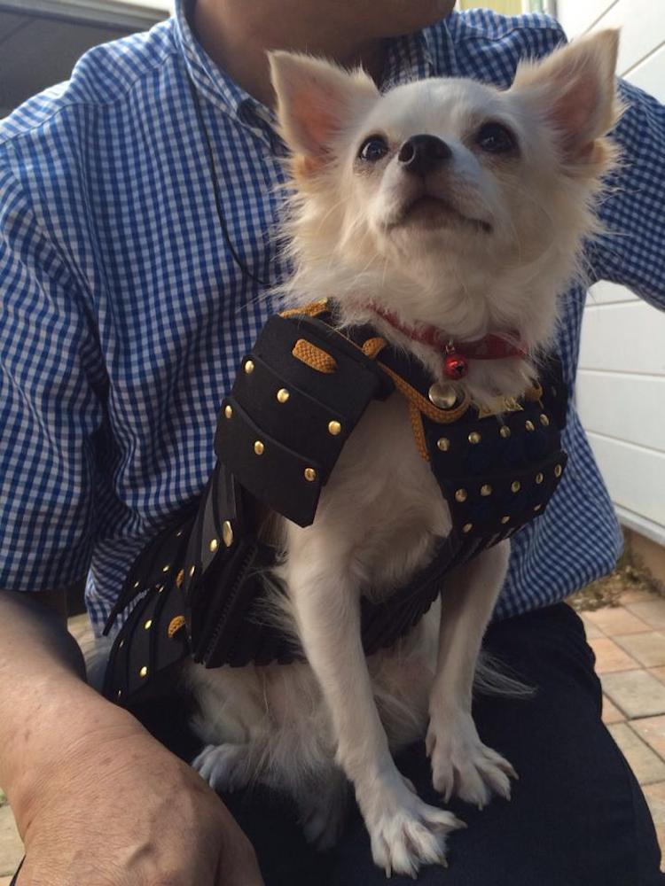 Pet Outfits