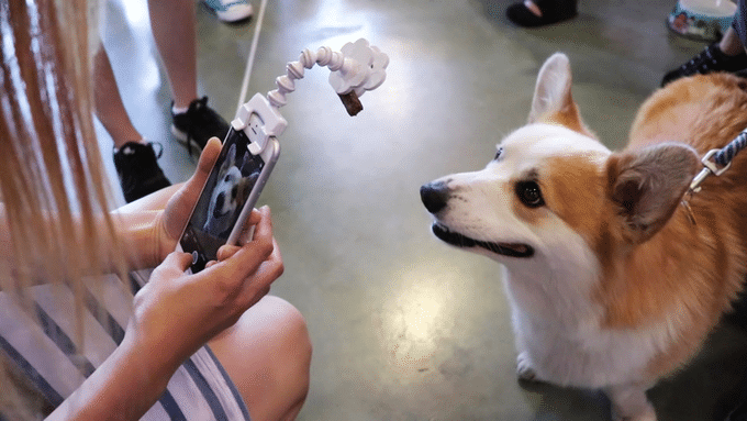 Flexy Paw Phone Attachments Pet Photography Pet Portraits Animal Selfie