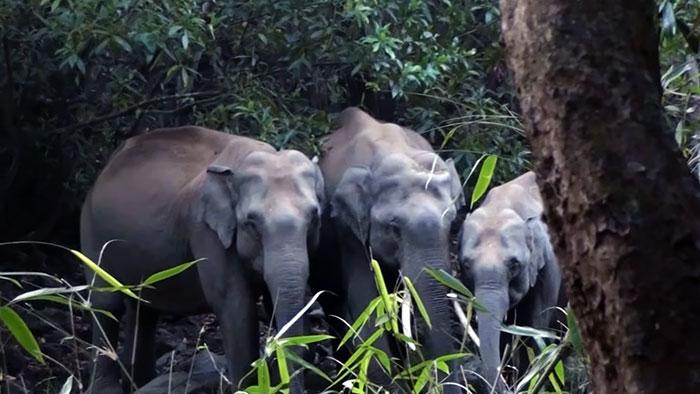 private wildlife sanctuary india