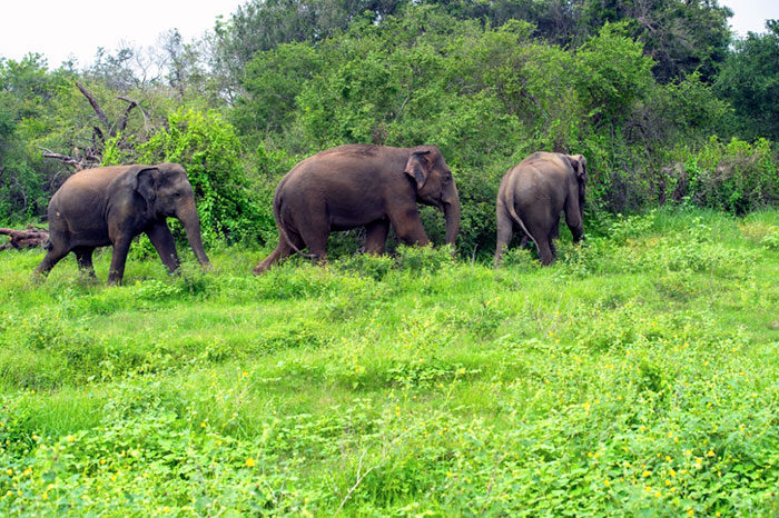 private wildlife sanctuary india sai sanctuary