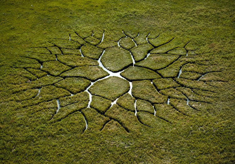 Stunning Land Art Glows From The Ground Like An Alien Life
