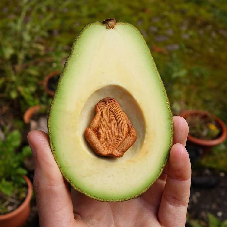 Jan Campbell Uses for Avocado Seeds