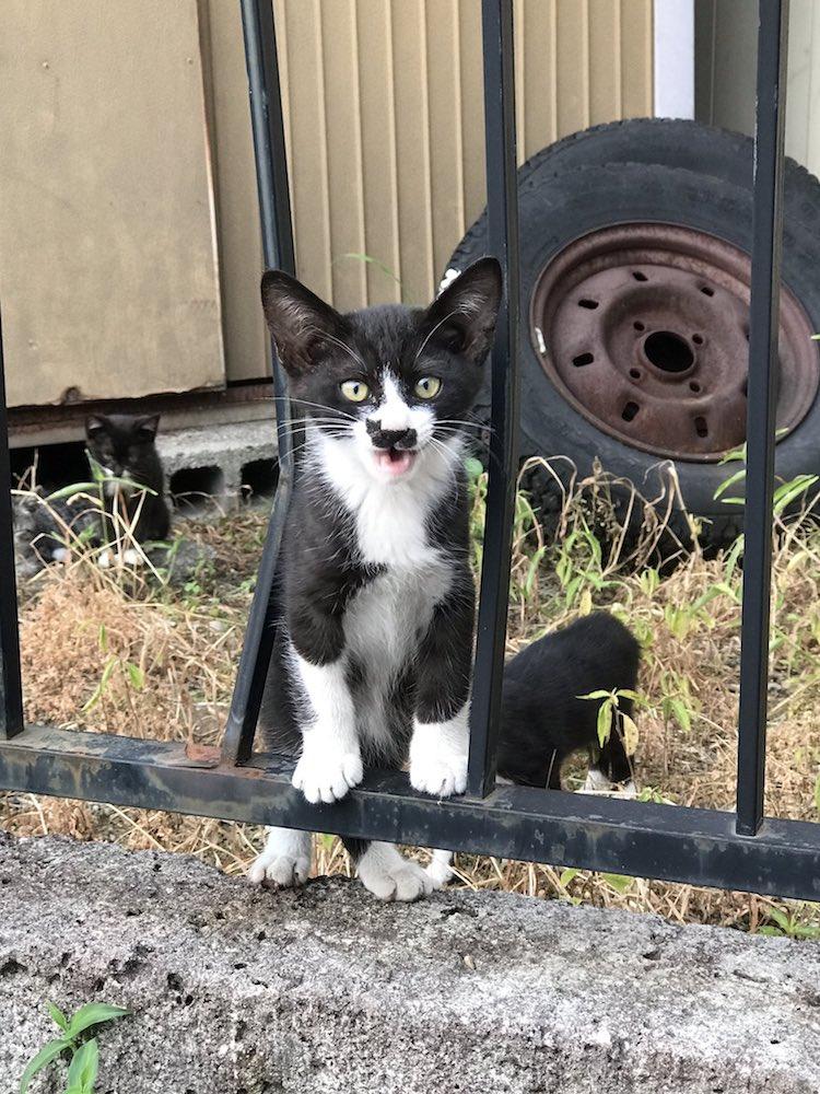 Weird Cat Face