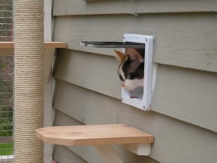 Build Your Own Catio