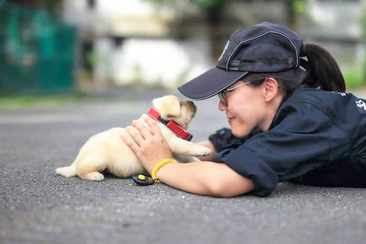 Adorable Police Puppy