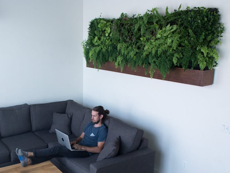 Matt Rabinovitch - Self Watering Vertical Garden