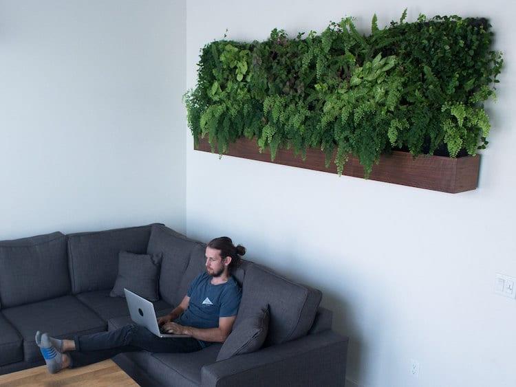 Incroyable Matt Rabinovitch   Self Watering Vertical Garden