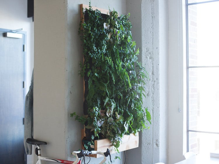 ... Matt Rabinovitch   Self Watering Vertical Garden