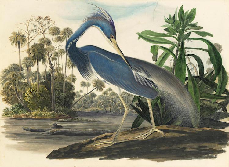 Audubon Oil Paintings